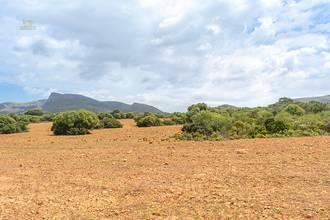 Große Ackerflächen