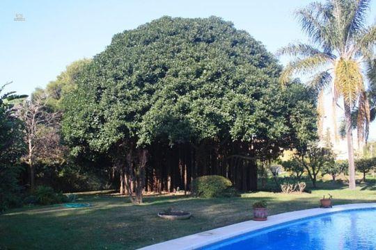 Luxus-Villa in Costalita